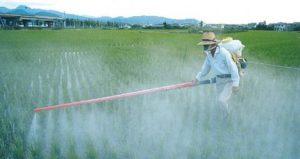 agrotoxicos-na-comida