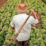 Covid-19: membros da Via Campesina destacam vulnerabilidade de camponeses e trabalhadores