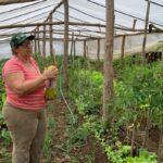 Mesmo diante da ausência de políticas de fomento dirigidas, agricultoras se destacam na produção de alimentos saudáveis